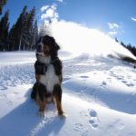 Toby checking out the snowmaking